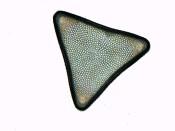 Triceratium formosum