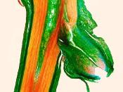 Sprossgabel, Pfaffenhütchen (Euonymus europaeus)